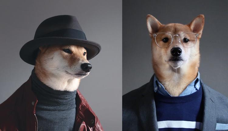 الكلب بودي يستعرض أحدث صيحات الموضة